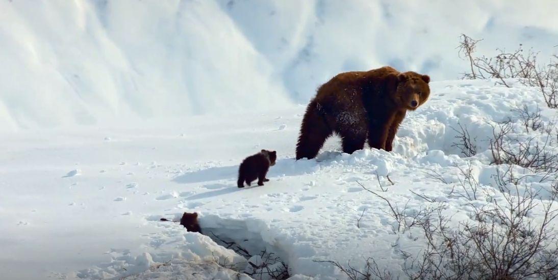 دانلود مستند Bears 2014 با دوبله فارسی